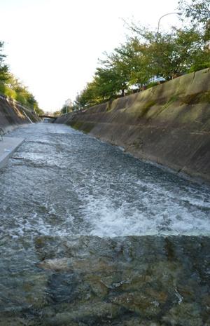 Ikuta_river02