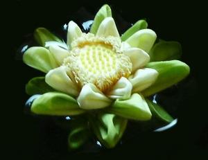 Lotus01