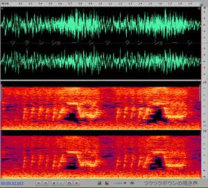 Tukutukuhboushi_snd Cicada's cry sound