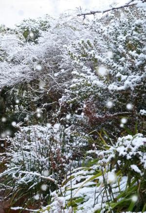 春の雪 Snow_in_spring01