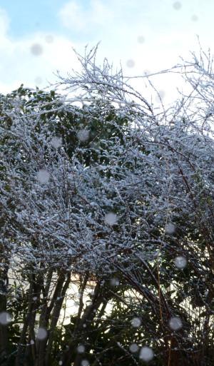 春の雪 Snow_in_spring03