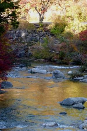 赤沢自然休養林の紅葉 赤沢美林 Fall418