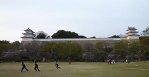 2013年 明石公園の桜 Cherry_akashi01