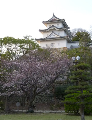 2013年 明石公園の桜 Cherry_akashi03