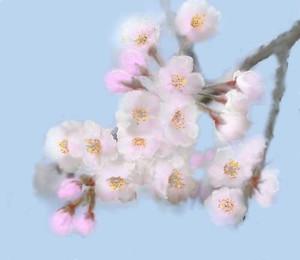 桜の描き方 Cherry