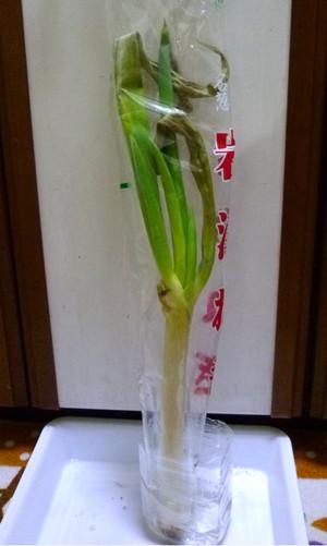岩津ネギ 保存方法 レシピ Iwatunegi_02