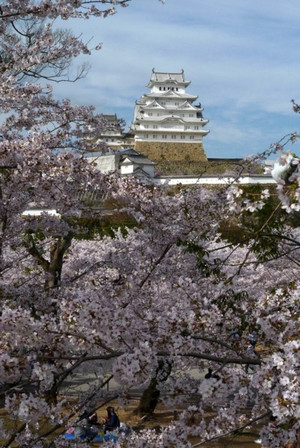 姫路城の桜 満開 Himezi_castle02