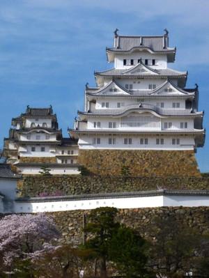 姫路城の桜 満開 Himezi_castle_ootemon
