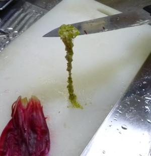 クジャクサボテン 花を食べる Cactus06