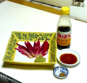 クジャクサボテン 花を食べる Cactus07