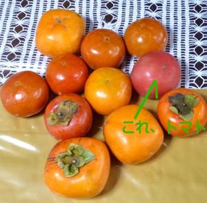 柿の中にトマト Kaki_tomato