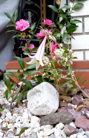 タカサゴユリ P0446_lily