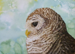 水彩画 F4 ふくろう Owl_fin