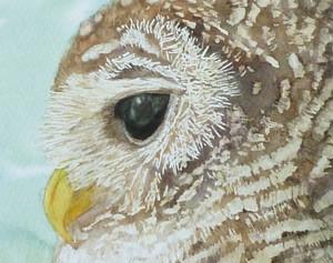 Owl_trm