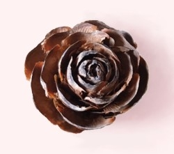 Cedar-rose