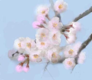 桜 「簡単お絵描き 桜」
