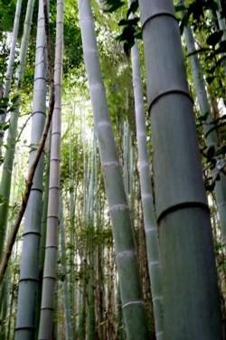 竹林 筍堀り