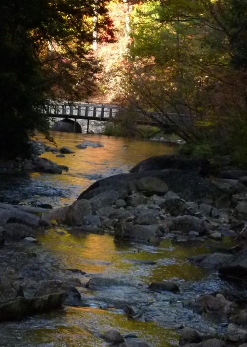紅葉の流れ  Fall 398