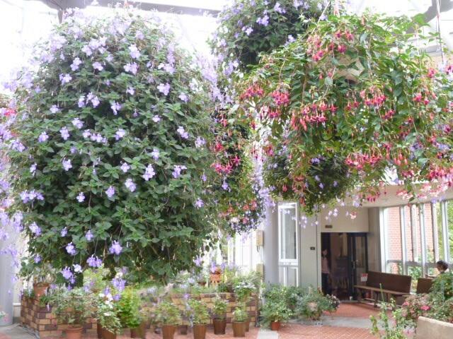 神戸布引ハーブ園 温室  Herb06