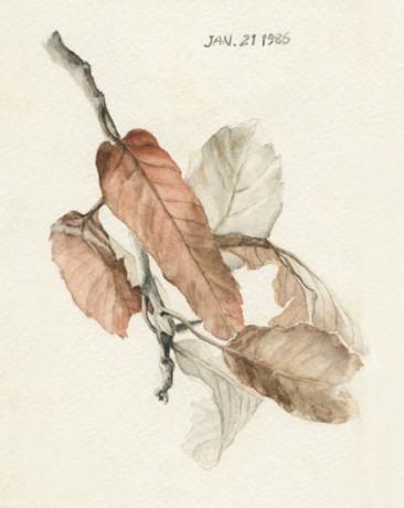 クヌギ 紅葉