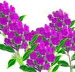 花の描き方 フロックステナー Flockswhite