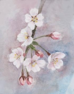 桜 水彩画 Sakura5