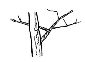 Tree_h02