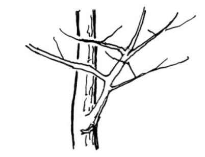 木の描き方(基本) Tree_h03