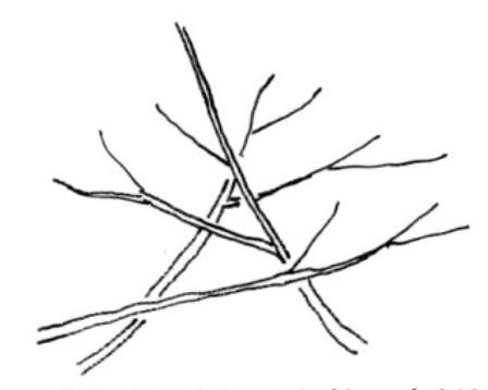 木の描き方(基本) Tree_h05