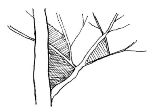 木の描き方(基本) Tree_h06