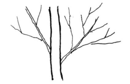 Tree_h07