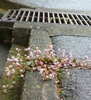 a flower on Asphalt