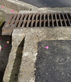 a flower on Asphalt2
