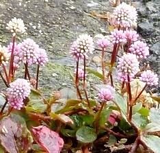 a flower on Asphalt trm