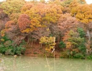 Autumn_tint
