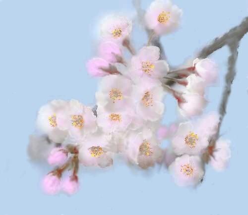 桜の描き方は ここをクリックくださいませ。