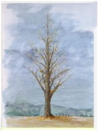 Tree14sml