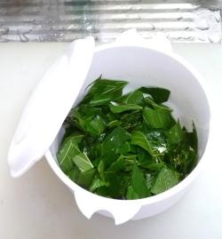 桑の葉を焙煎 P1140945_plasticpot_sml
